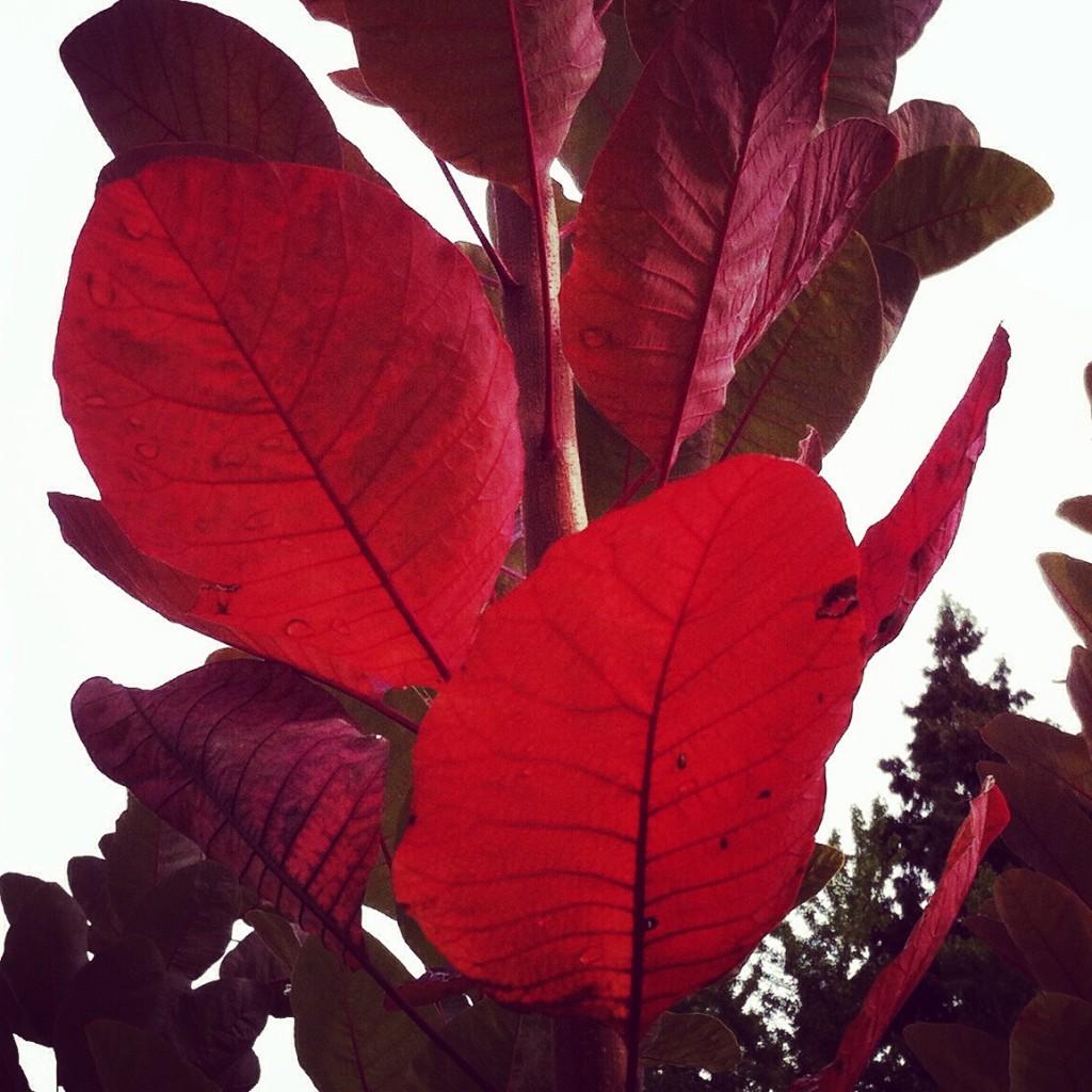 WBC-Instagram-2-automne-feuilles-11