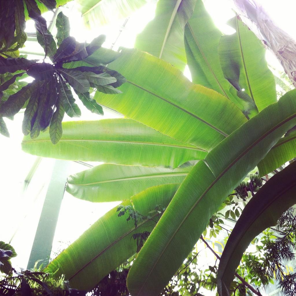 WBC-Instagram-2-jardin-botanique-paris-10