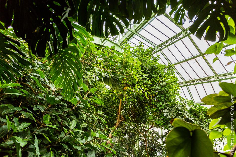 Grandes serres du jardin des plantes de paris wild birds - Serres jardin des plantes ...