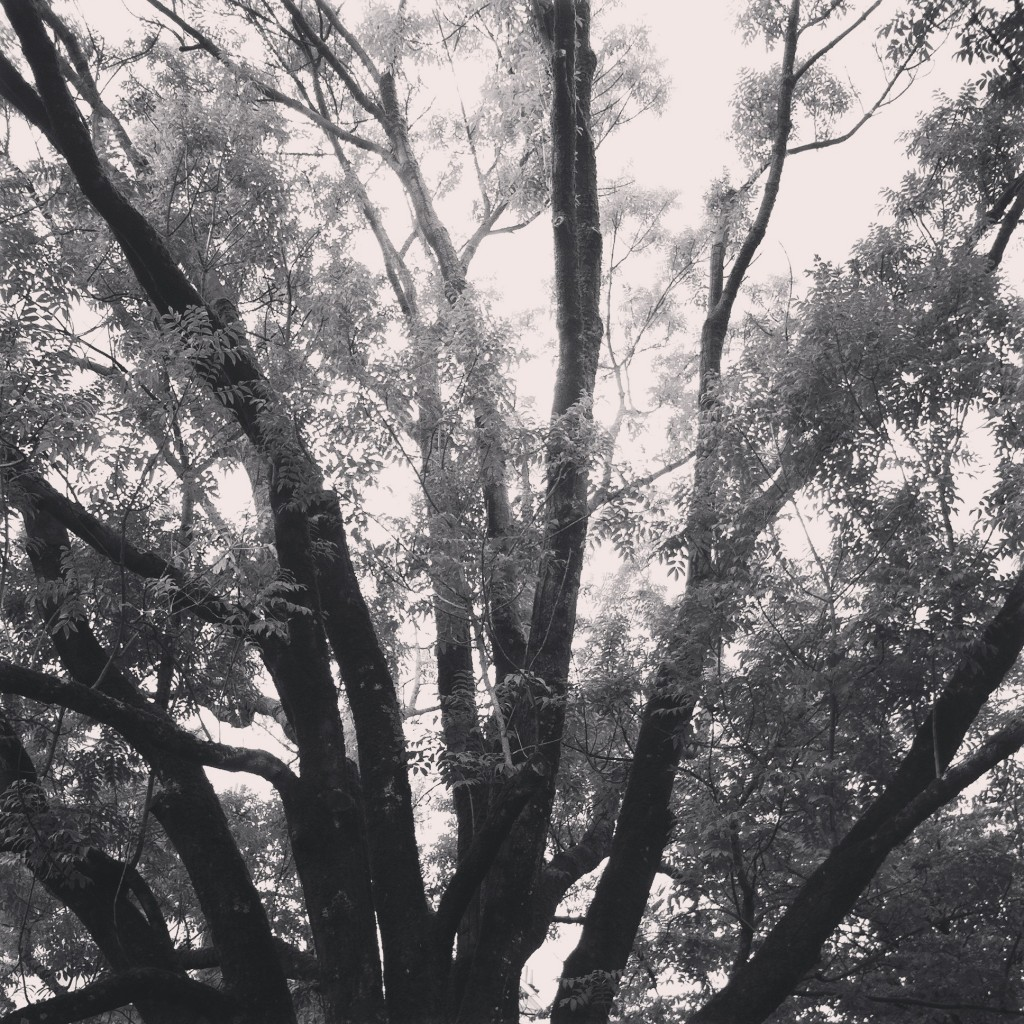 WBC-Instagram-3-arbre