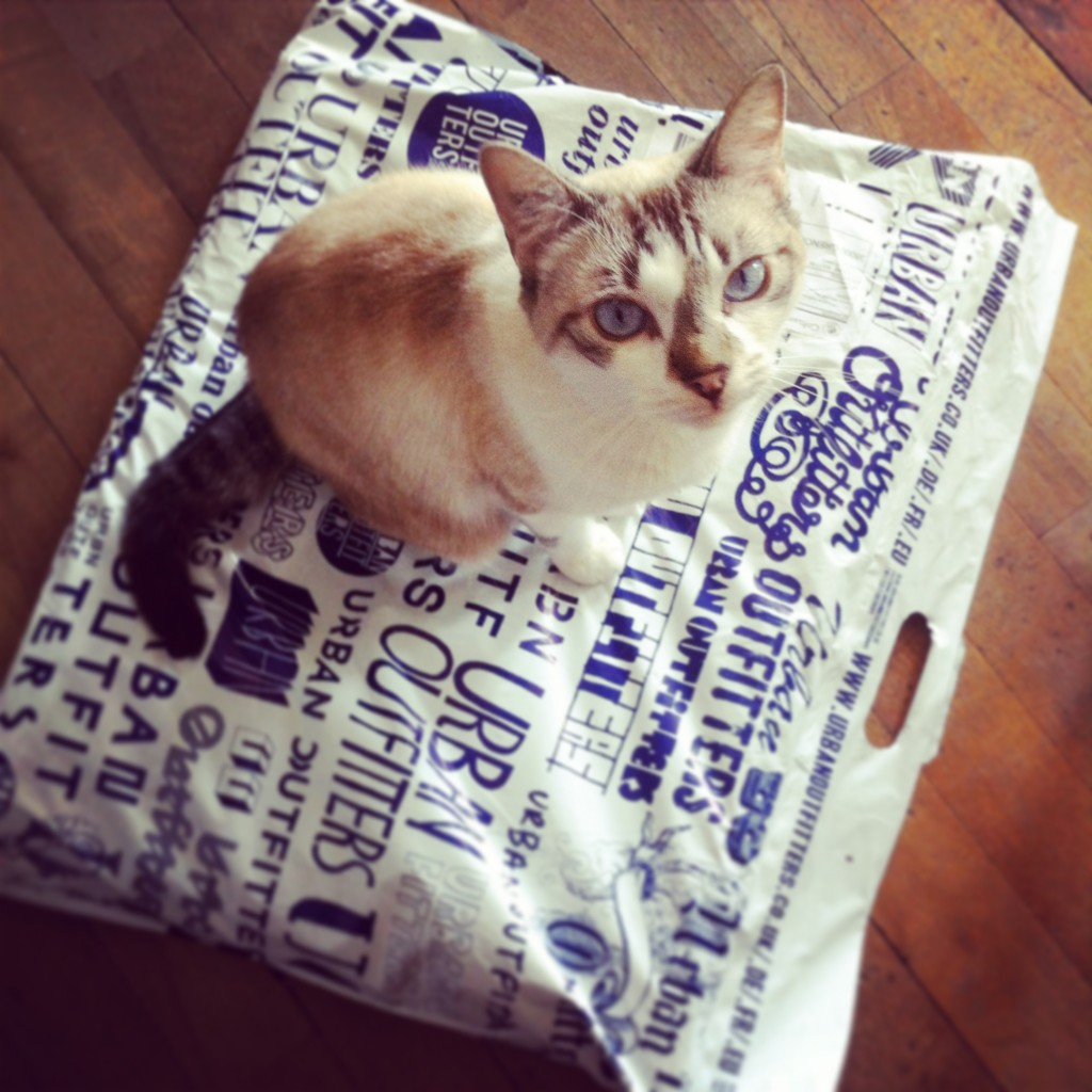 WBC-Instagram-3-cat-urbanoutfitters