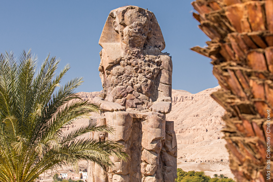 Colosses de Memnon Egypte