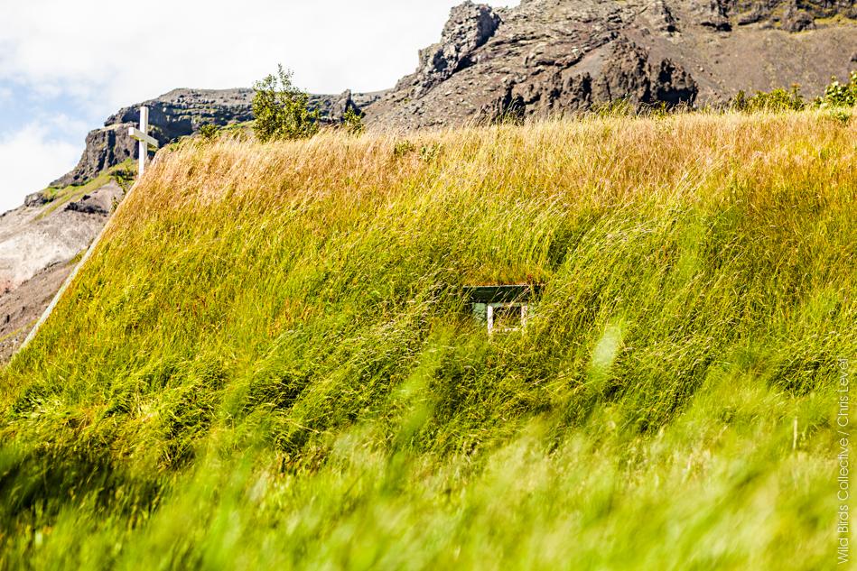 Hofskirkja Islande