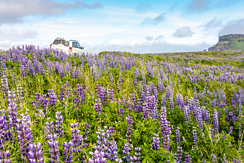 Islande Blue Car Rental