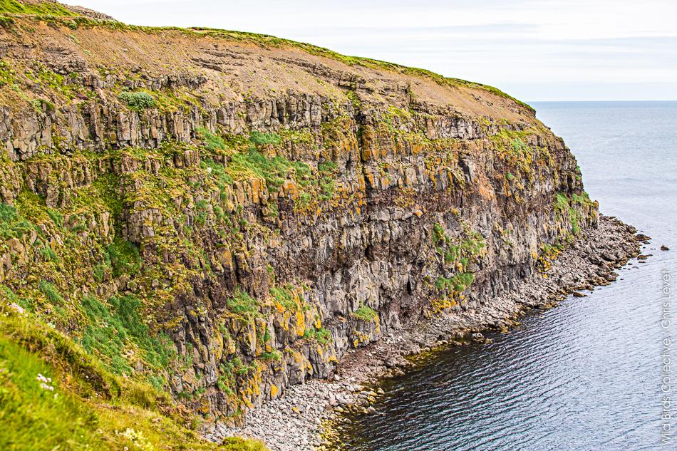 Macareux Islande
