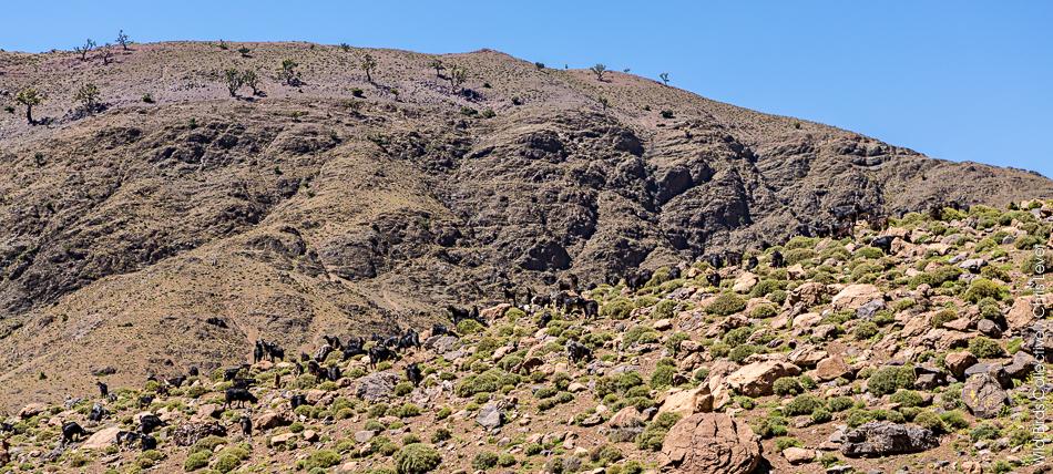 Trek Maroc Toubkal