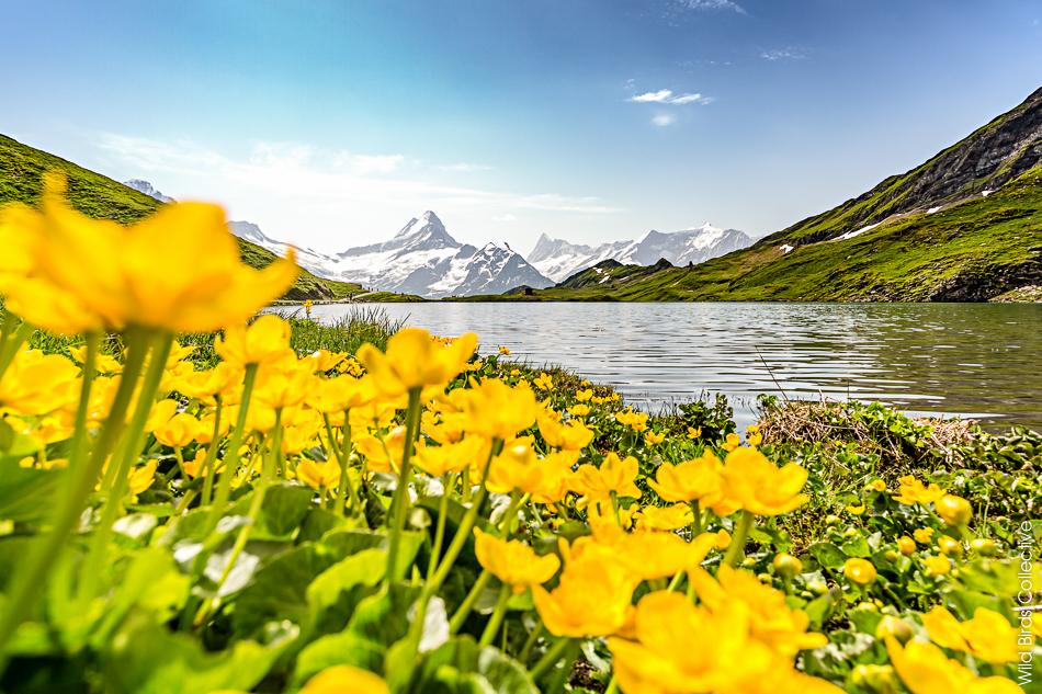 Jungfrau : Randonnée au lac Bachalp