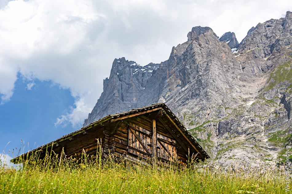Chalet suisse Jungfrau