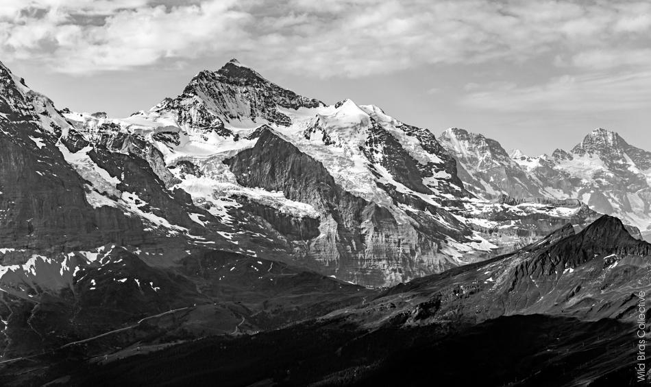 Jungfrau Suisse