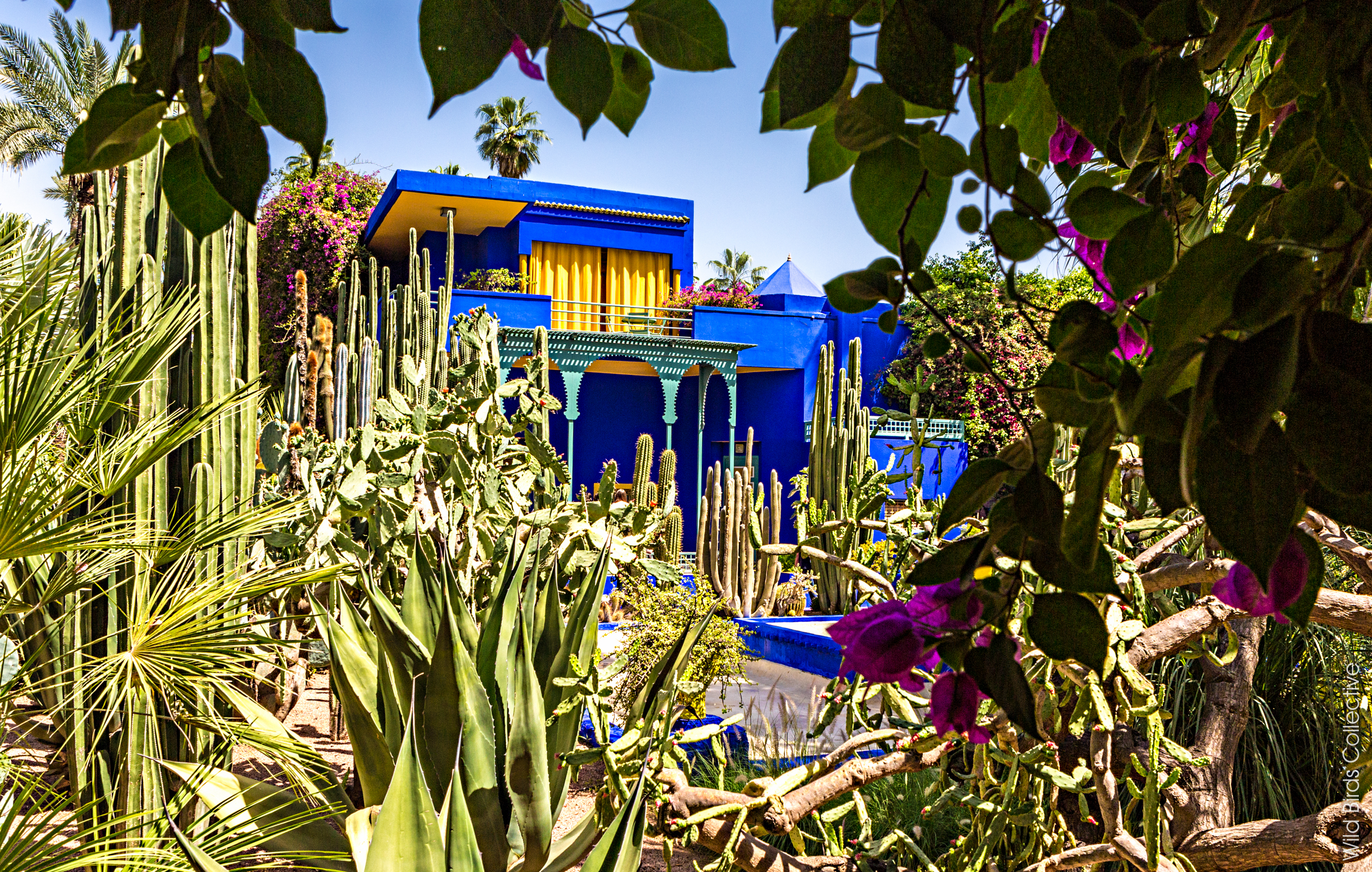 Visiter le jardin majorelle marrakech wild birds for Jardin marrakech
