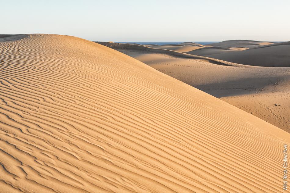 """Résultat de recherche d'images pour """"dunes de maspalomas"""""""