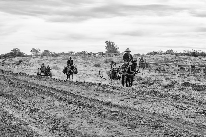 Paysans et mules au Maroc