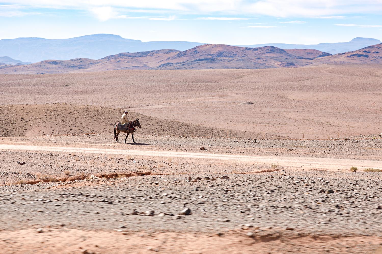Homme sur une mule au Maroc