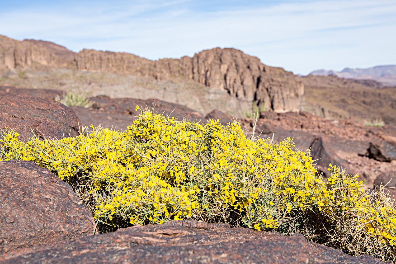 Végétation du djebel Saghro au Maroc