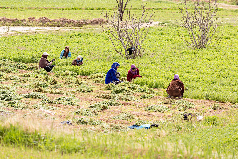Femmes travaillant dans les champs au Maroc